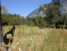 105  Yosemitske louky
