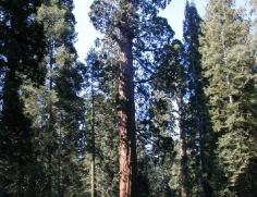 Sequoia at Grant Grove 3