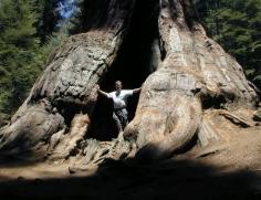 Jan in the Tree