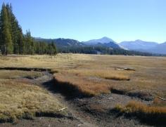 110 Yosemite Louky