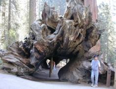 Sequoia Shelter