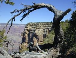 27 Grand Canyon Stromovy oblouk