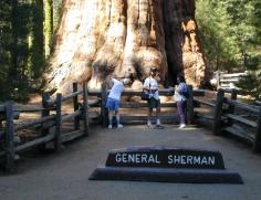 General Sherman 3